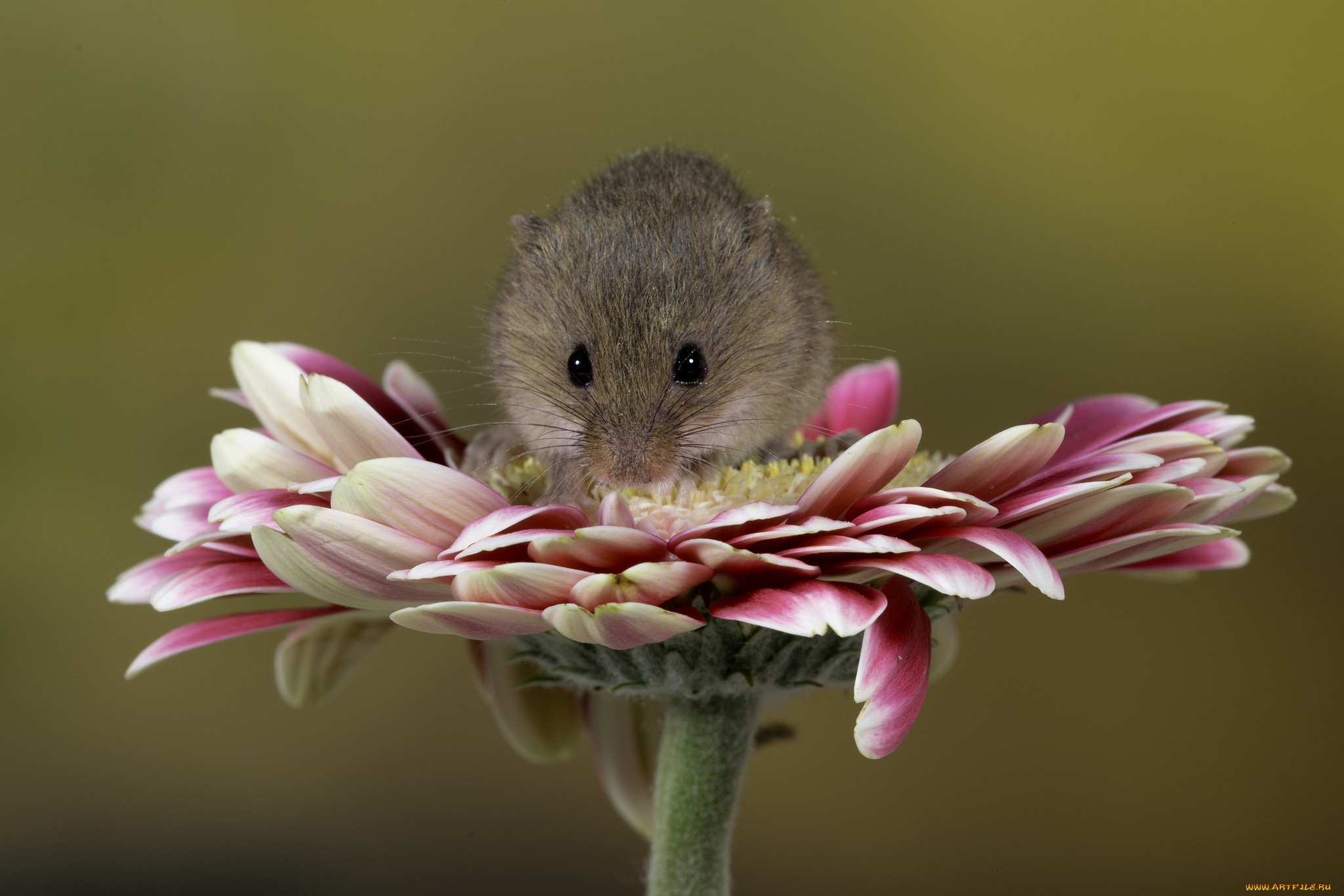 подойдет открытка мышка фото может понять